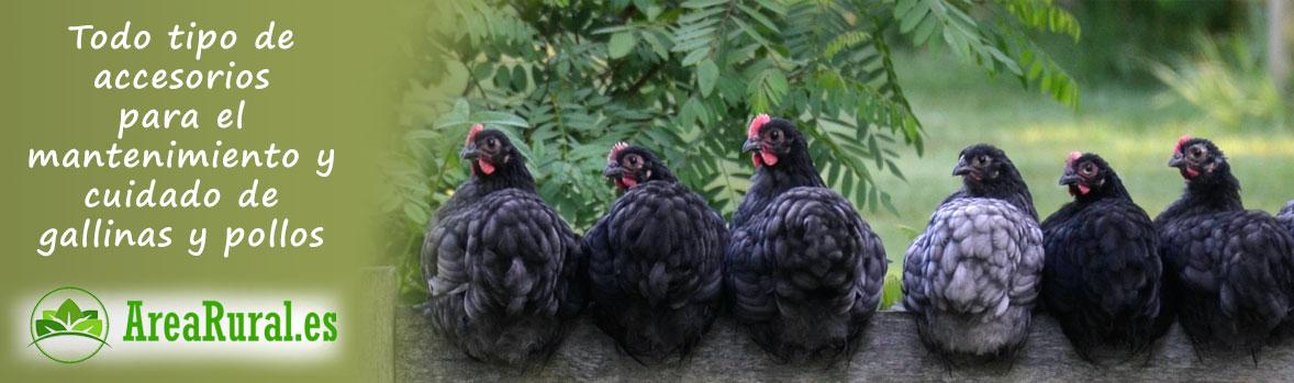 Gallinas ponedoras y pollos